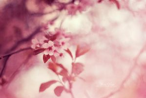 Flower by alina0
