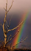 rainbow dreams 03 by JWFisher