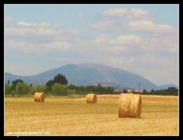 Assisi Fields by caybeach