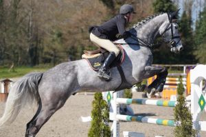 Grey Horse - Show Jumping Stock 8.5 by MagicLecktra