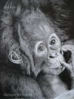 Baby orango - pencil by selvatico3