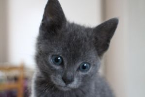 Cinders the Kitten! by Grell89