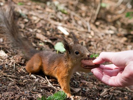 Assistant, hand that squirrel a cookie by TomiTapio