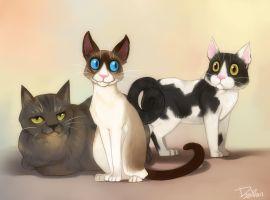 cats by DOXOPHILIA