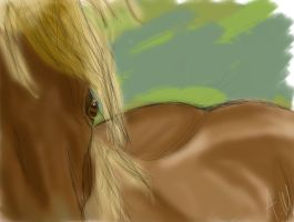 close up horsiee.. by ashleighh9136