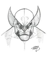 Wolverine SKETCH 2016 by LucasAckerman