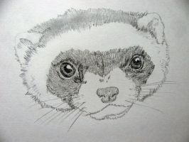 Ferret face. Why is that an insult by chrisravensar
