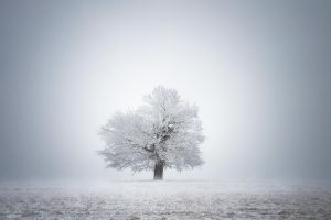 -White solitude and light- by Janek-Sedlar