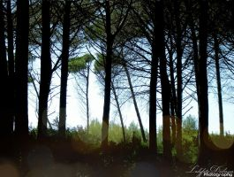 The pinewood II by FrancescaDelfino