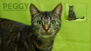 Peggy Application Photo HD 1920 by hoschie