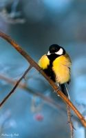 bird on a branch by PictureByPali