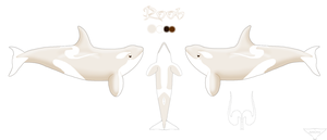 Rooh Reference Sheet (Polar Pelagic) by AnoOrca