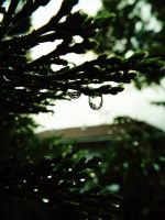 Pine Droplets by MaytalArt