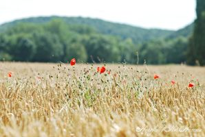 Poppies in a wheatfield by Hopefully-not-human