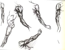 Arm Muscles by ButtZilla
