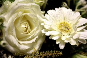 Two White Flowers by TheLittleCrow