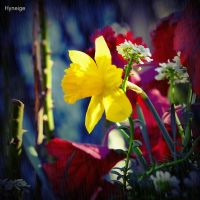 Couleurs au printemps by hyneige