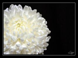 White Flower by LiNoR
