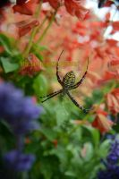Spider of the Fall Flowers by artjte