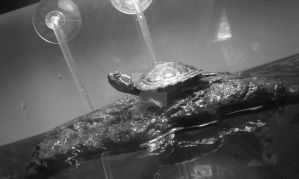 Le Pose ::Turtle:: by Miss-Smutty