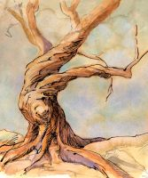 Gnarled Tree by method2madness