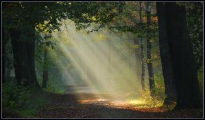 Another sunbeam morning by jchanders