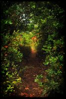 The Pathway by SublimeBudd