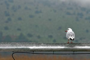 Look of the Seagull by Filmdirector