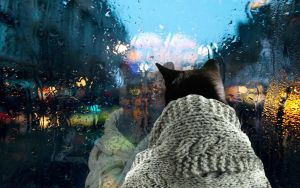 Cat reflecting on a rainy day. by photonshop