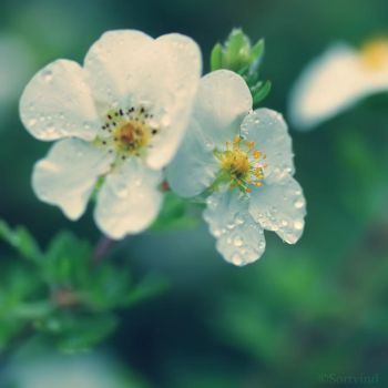 Clarity in Blur by Sortvind