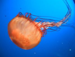Squishy II by Nothing--Special
