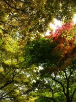 Trees on Many Colours by ShiverZPhotography