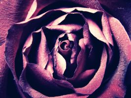 Heart of a rose by Tharwaithiel