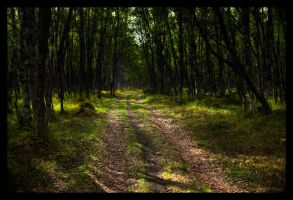 Forest 2 by Zx20