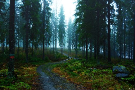Forest Trail by Toni-R