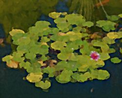 pond by ChaelMontgomery