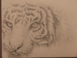 Tiger Sketch by SFXmonster
