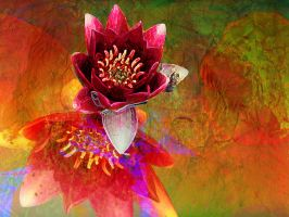 Waterlily Red by Tackon