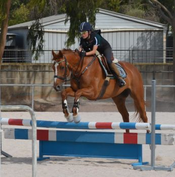 Puzzle Show Jumping Stock 5 by Cappyandme