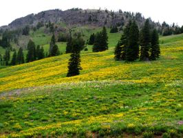 Yellowstone meadows #2 by KRHPhotography