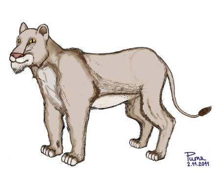 Lioness by dapumakat