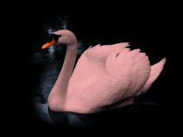 Pink Swan by ani07789