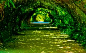 Pathway by Bluebuterfly72