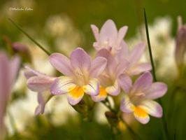 Roadside Beauty by FireflyPhotosAust