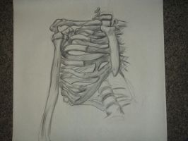 Skeleton Rib Cage Study by aestheticartist