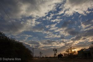 Sunset at Masinagudi Elephant Reserve in India by StephCarmel