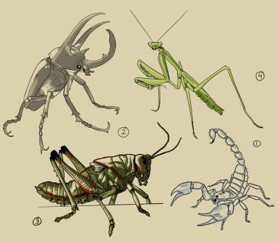 Reference Drawing - Block-in - Insects by warkentien2