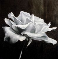 White Rose by learquiteto
