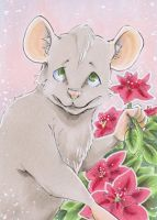 576 ACEO Ratten Stern by uniquorned