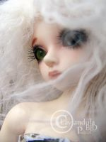 The wind shall be my guide by Lavandula-BJD